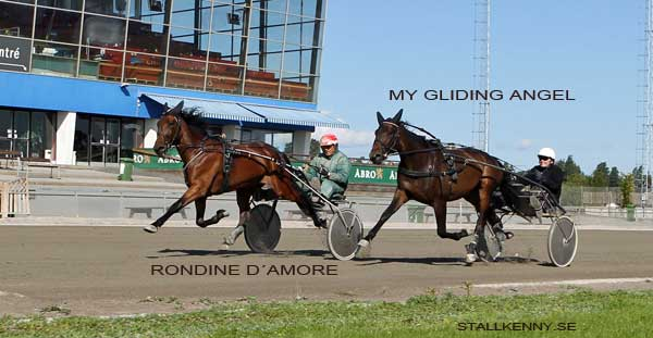 rondine-d-amore-my-gliding-.jpg