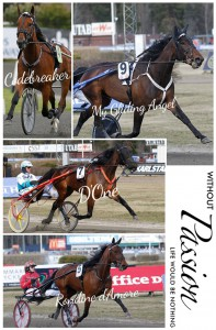 codebreaker-d-one-My-Gliding-Angel-rondine-d-amore-stallkenny-aby