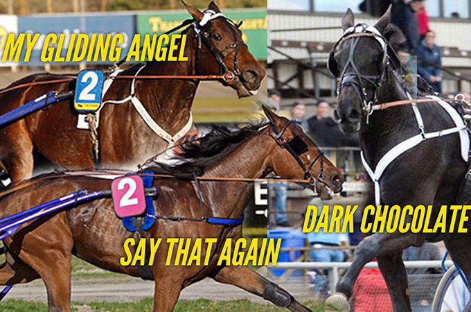 stall-kennys-andelshastar-dark-chocolate-say-that-again-My-Gliding-Angel-elitloppshelgen